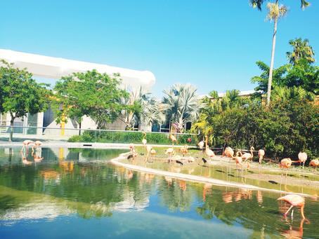 Miami Zoo Perfecto para un día en familia