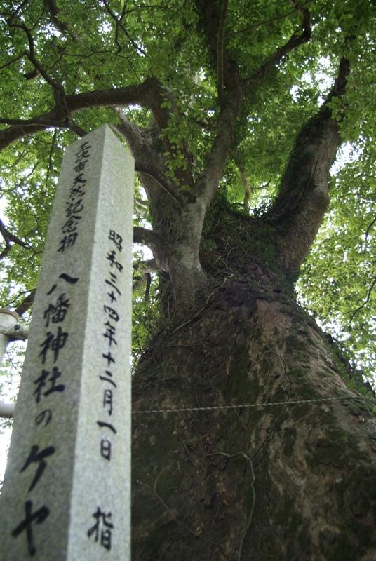 巨木(海渡)
