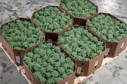 Stem Broccoli