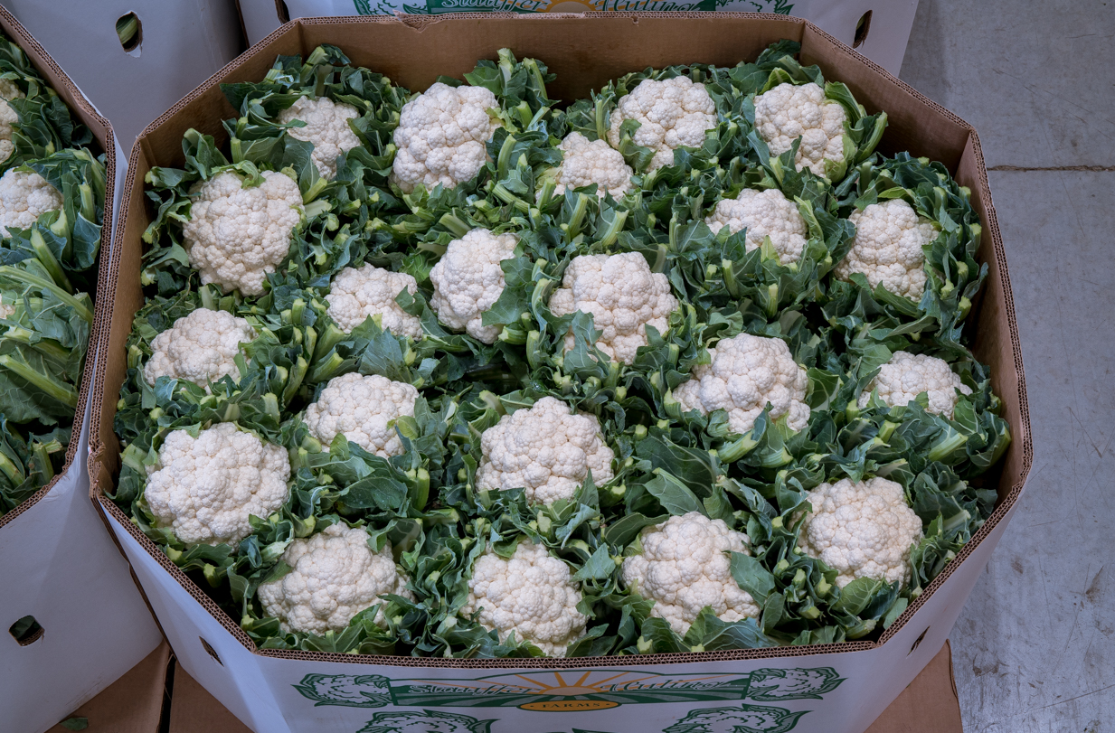 Jacket Cauliflower