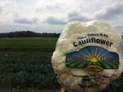 Cello Wrapped Cauliflower