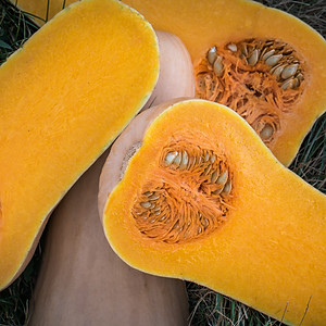 Butternut For Processing