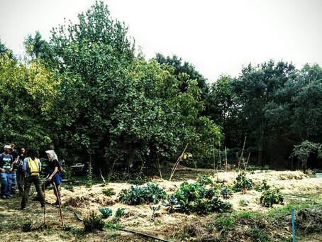 Taller de permacultura aplicada en la Sierra de Huelva