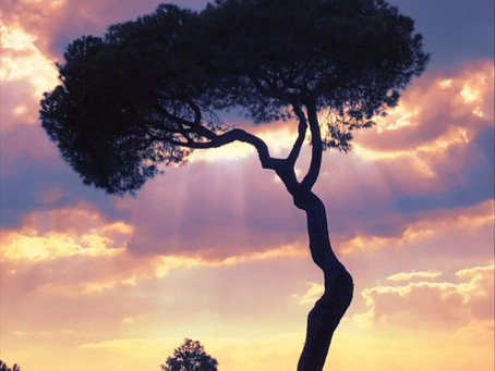 La importancia de los árboles para el medio ambiente y la humanidad