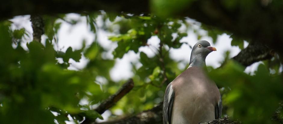 Covid - The Mystery & the bird