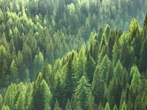 Pursuing ESG: Adding Environmental, Social, and Governance Factors