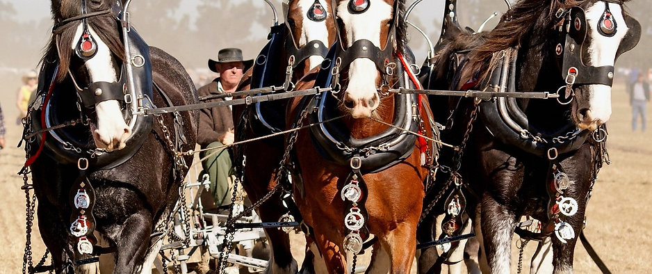 horses-2-min.jpg