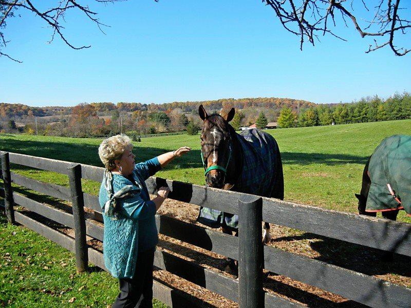 Linda Horse.jpg