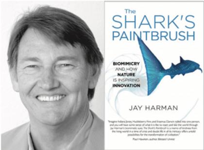 jay-harman-Sharks-Paintbrush-GIGS-300x22