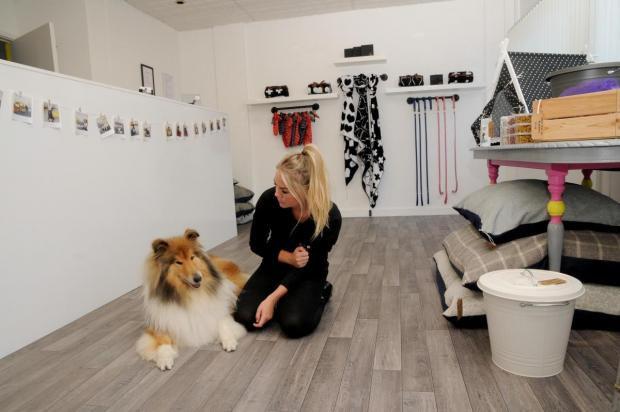 The Dog Haus Shop