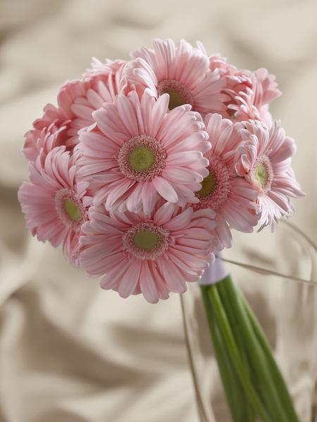 Bouquet de Gerbera roses claires
