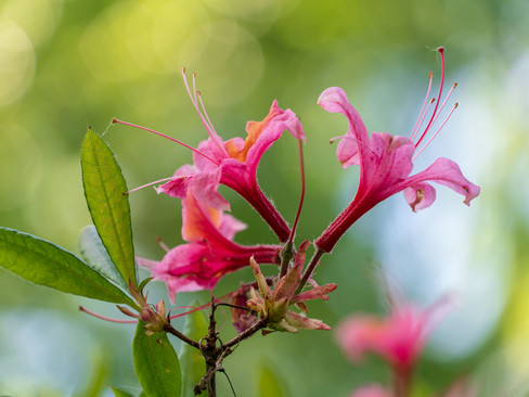 pinkoranjebloemen