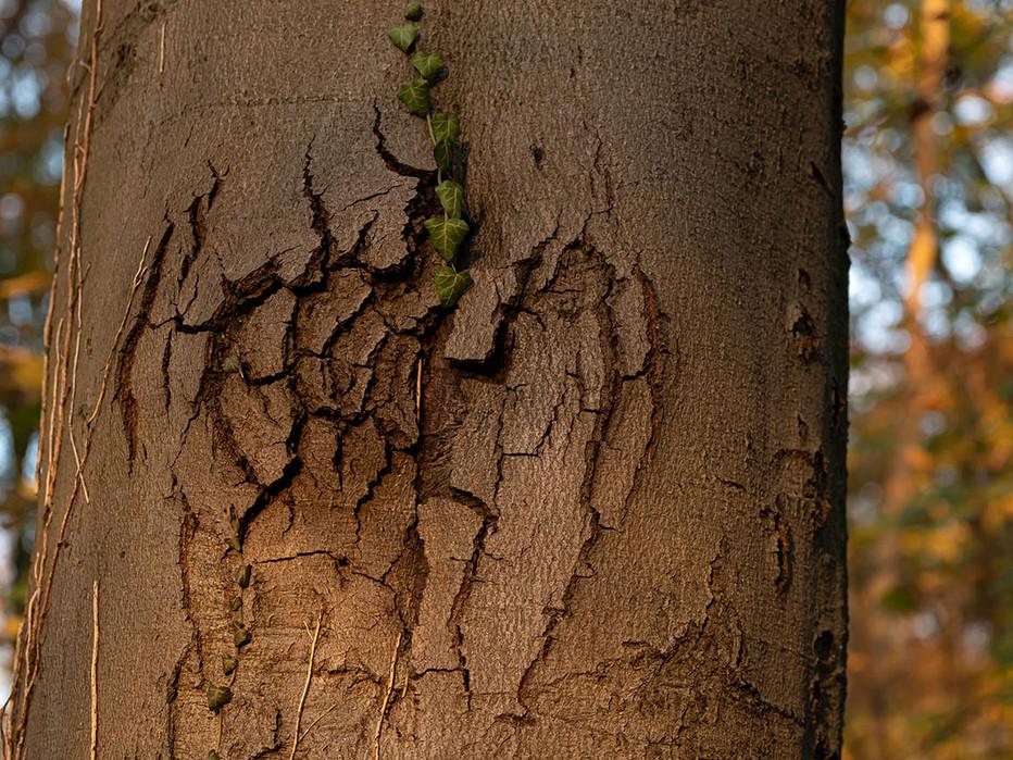 Herz-im-Baum