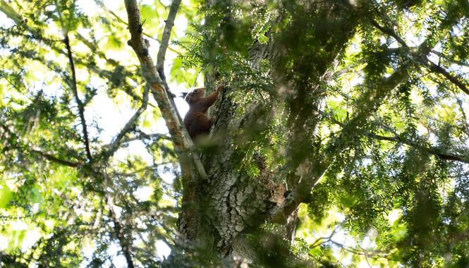 Horny im Wald