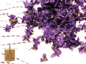 Autour de la Violette