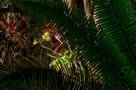 Orchid Lighting
