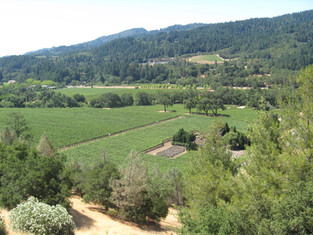 Welcome to the Napa Valley (Napa Day 1)