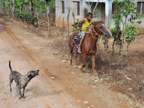Dog Chasing a Horse (Samana, Dominican Republic)