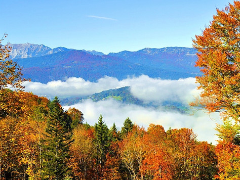 Fall Foliage in the Alps (Obersalzberg, Germany)