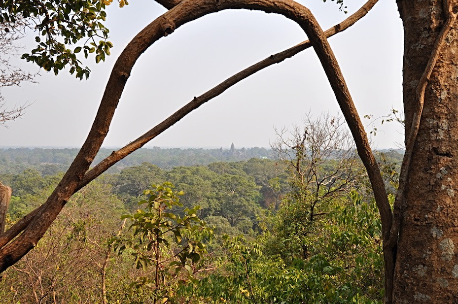 A View Over the Thick Jungle Outside Siem Reap