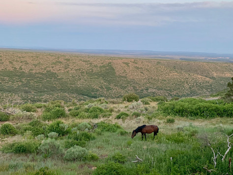 Wild Horse Under the Moon (Mesa Verde National Park, CO)
