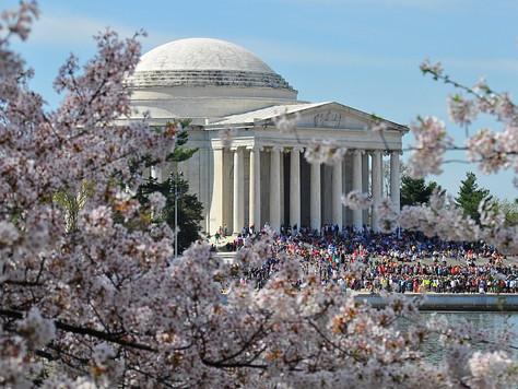 Cherry Blossom Festival (Washington, D.C.)