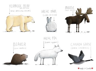 Canadian Animals