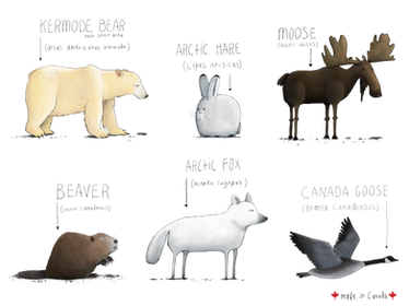 Canadian Animals