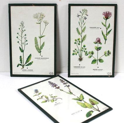 """3 planches botaniques""""violettes"""""""