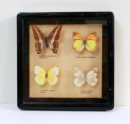 Cadre ancien aux papillons