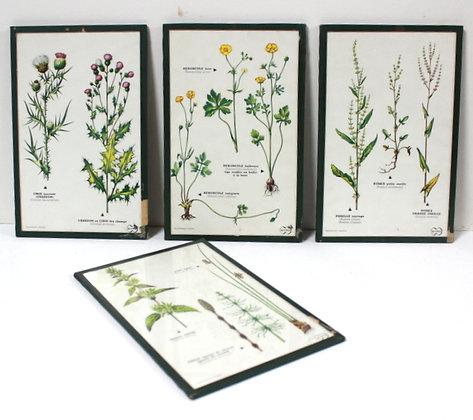 4 planches botaniques