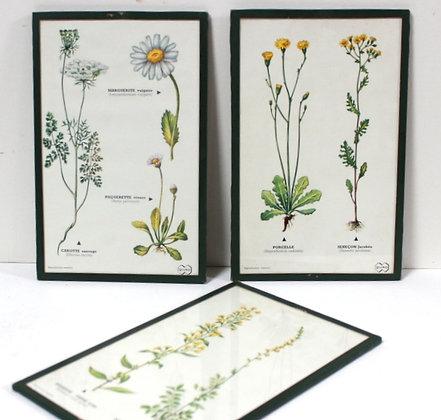 "3 planches botaniques ""jaunes"""