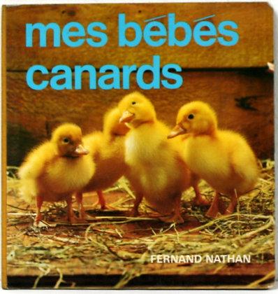 Mes bébés canards