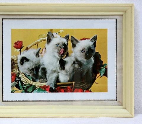 Photo kitsch chatons 1950