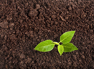 Seedling green plant surface top view textured background.jpg