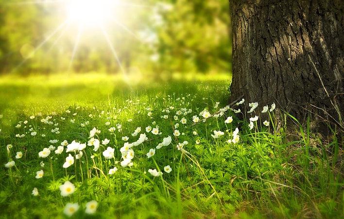 image nature 1.jpg