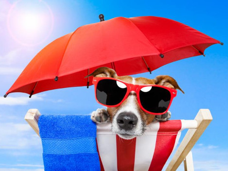 Sun Safety for Summer