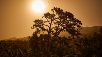 La Palma Calima