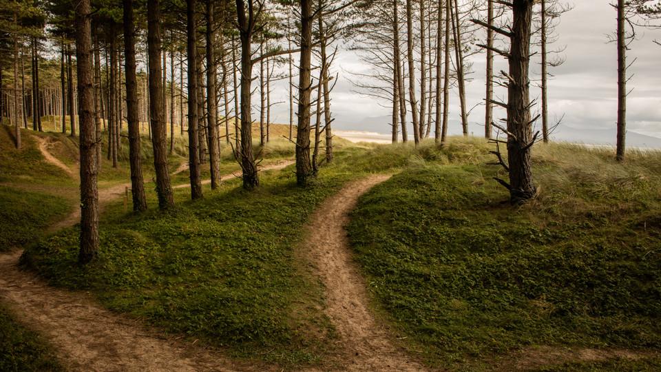 Wald, Wales, Küste, Landschaft, trip, coast, landscape, wood, trekking, wales, great britain,