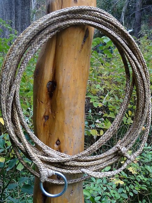 """Rawhide riata ,""""Long"""" 8 strand braided . LAZ 09."""