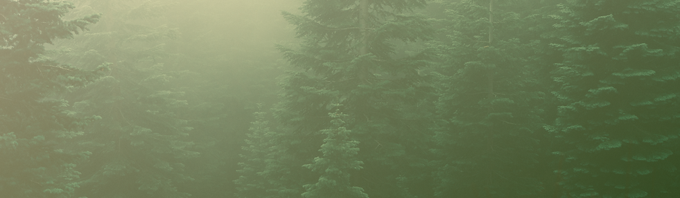 trees for website.png
