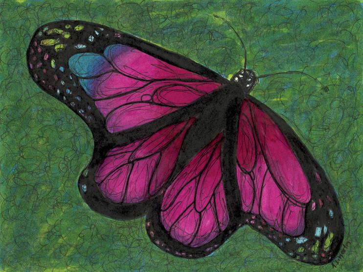 butterfly 72dpi.jpg