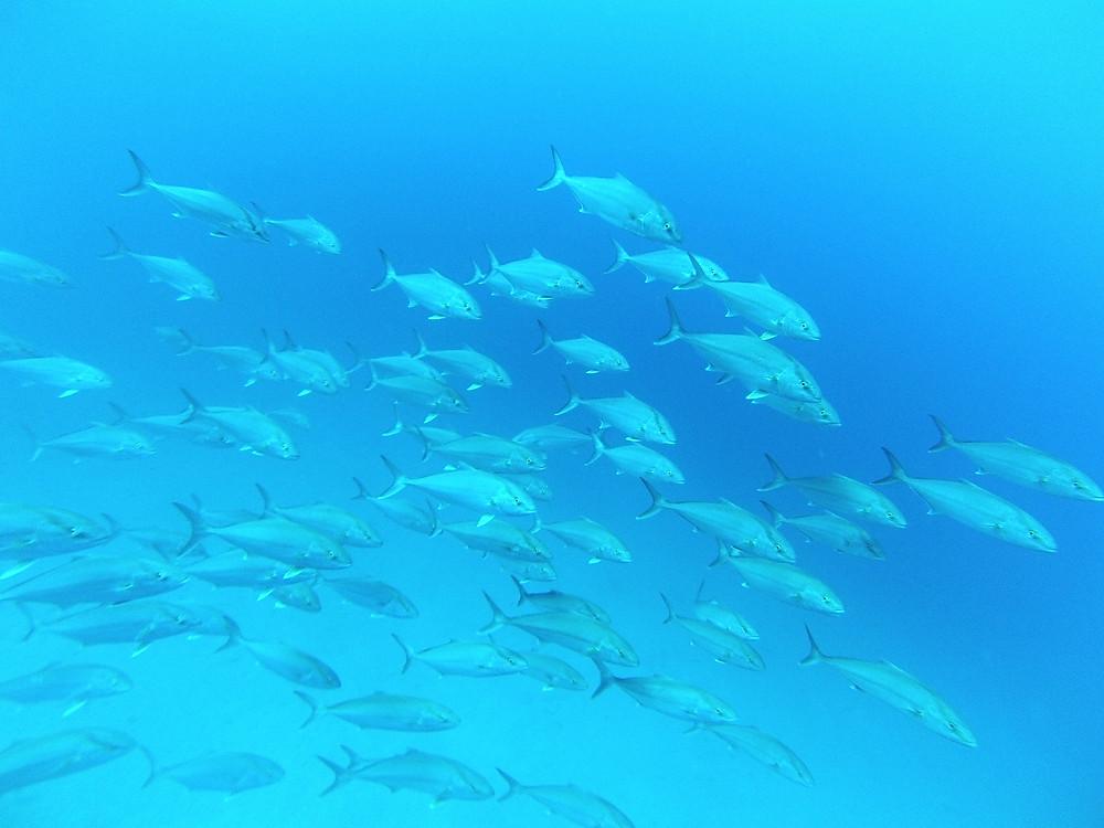Punta Galera school of fish Photo: Louisa Collyns