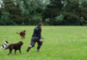 Off-lead dog walking Bournemouth & Poole