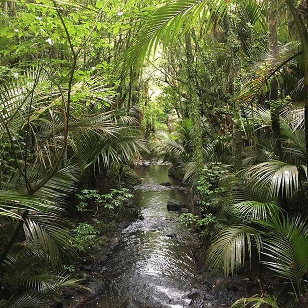 Taranaki Forest