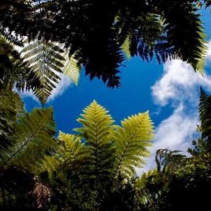Fersn, West Coast, South Island