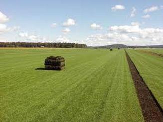 sod field.jpg