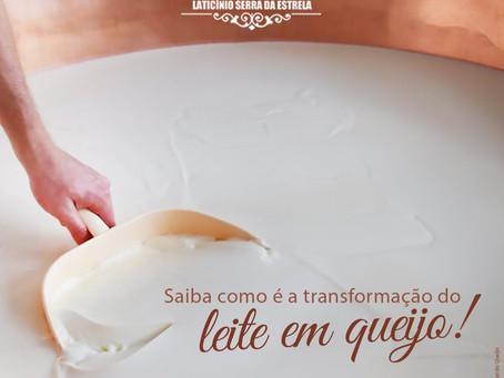 Saiba como é a transformação do leite em queijo!