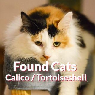 Found Cats - Calico | Tortoiseshell