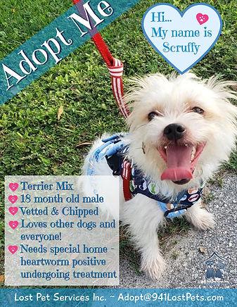 Adoption flyer Scruffy.jpg